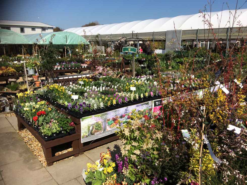 June 2017 Marks the 20th Anniversary of the Founding of Avant Garden Centre