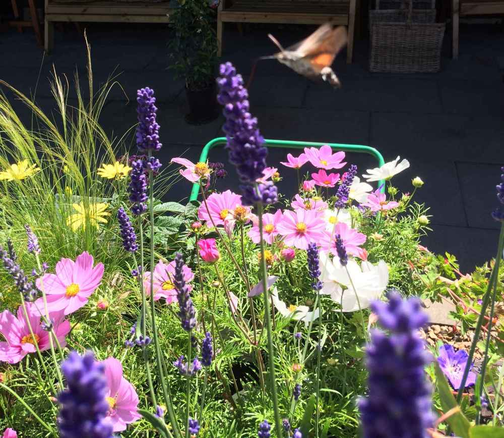 How to be More Pollinator Friendly