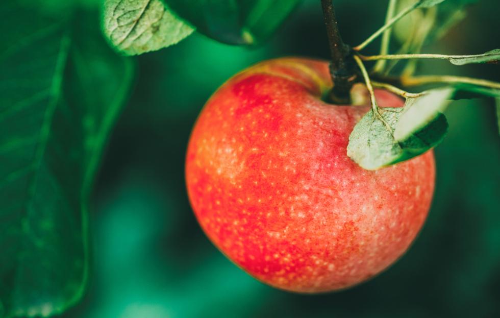 Gardening To Do List: September Edition
