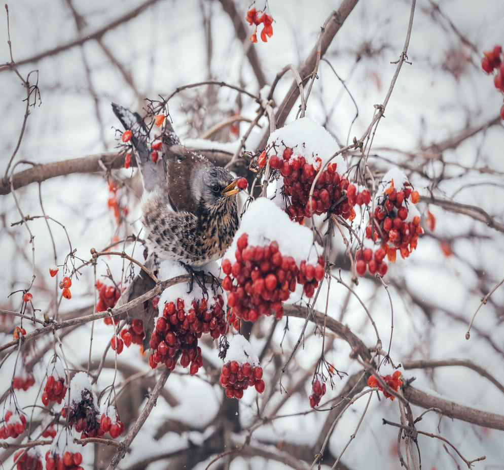 winter birdcare